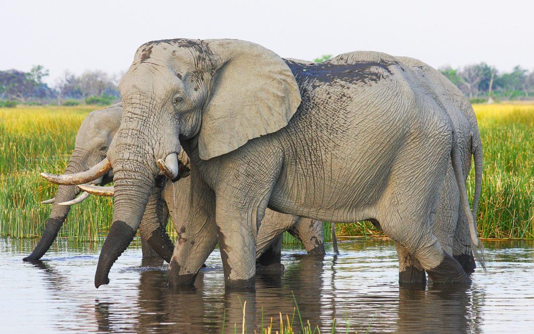 BOTSWANA – Safari authentique 9 jours / 8 nuits